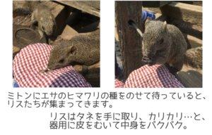 町田リス園 エサやり体験